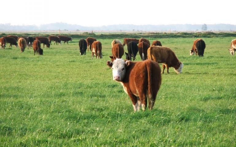 Manejo ganadero: cómo lograr una mejora productiva de la recría de bovinos en otoño e invierno