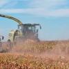 Sorgo, una pieza clave para incrementar la rentabilidad en la ganadería